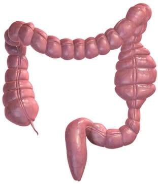 Blocco Intestinale