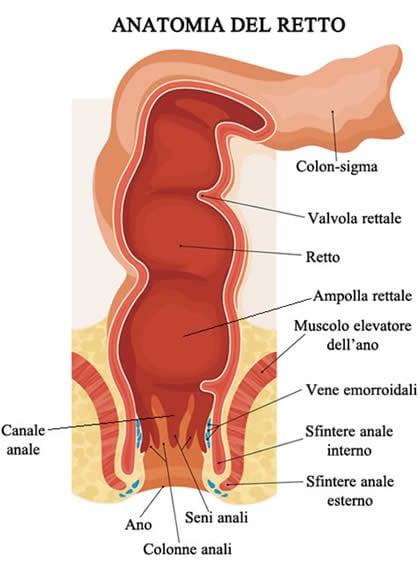 sesso con anale plug