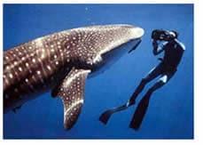 fobie subacqueo