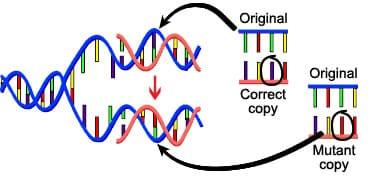 Mutazioen DNA